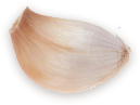 garlic clove 1